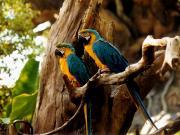 Animal Kingdom : les perroquets de l'arbre de vie