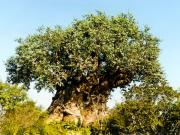Animal Kingdom : l'arbre de vie