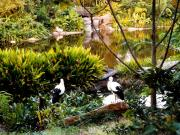 Animal Kingdom : jardin exotique et oiseaux