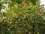 Discovery Island : les oiseaux scarlet ibis